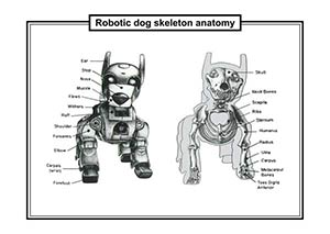 ROBOTIC DOG SKELETON ANATOMY